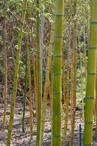 Bamboo Quarry Hill 02_15_2016